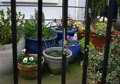 Cure indispensabili per le piante tropicali da for Piante e fiori da appartamento