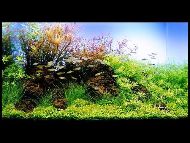 Scegliere le piante per l acquario domestico for Piante acquisto