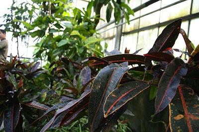 piante esotiche da esterno