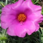 Terrazzi in fiore