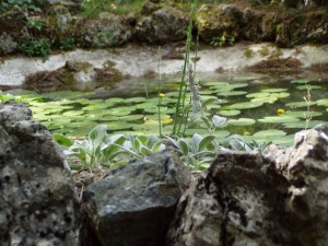 Prevedere un laghetto nel proprio giardino
