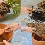 Rinvasare le piante