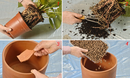 Coltivare piante in casa -II Parte- Giardinaggio Piante e ...