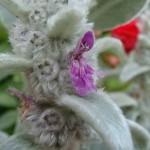 piante particolari