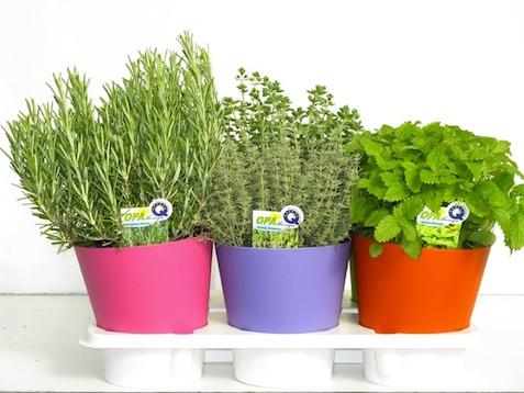 Il calendario lunario del mese di settembre giardinaggio for Erbe aromatiche in vaso