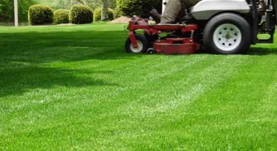 Irrigare e concimare il prato in estate giardinaggio for Quando concimare il prato