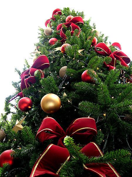 Albero di Natale: come scegliere