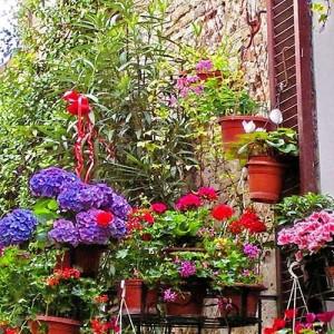 Balconi Verdi: come creare un balcone verde e profumato ...