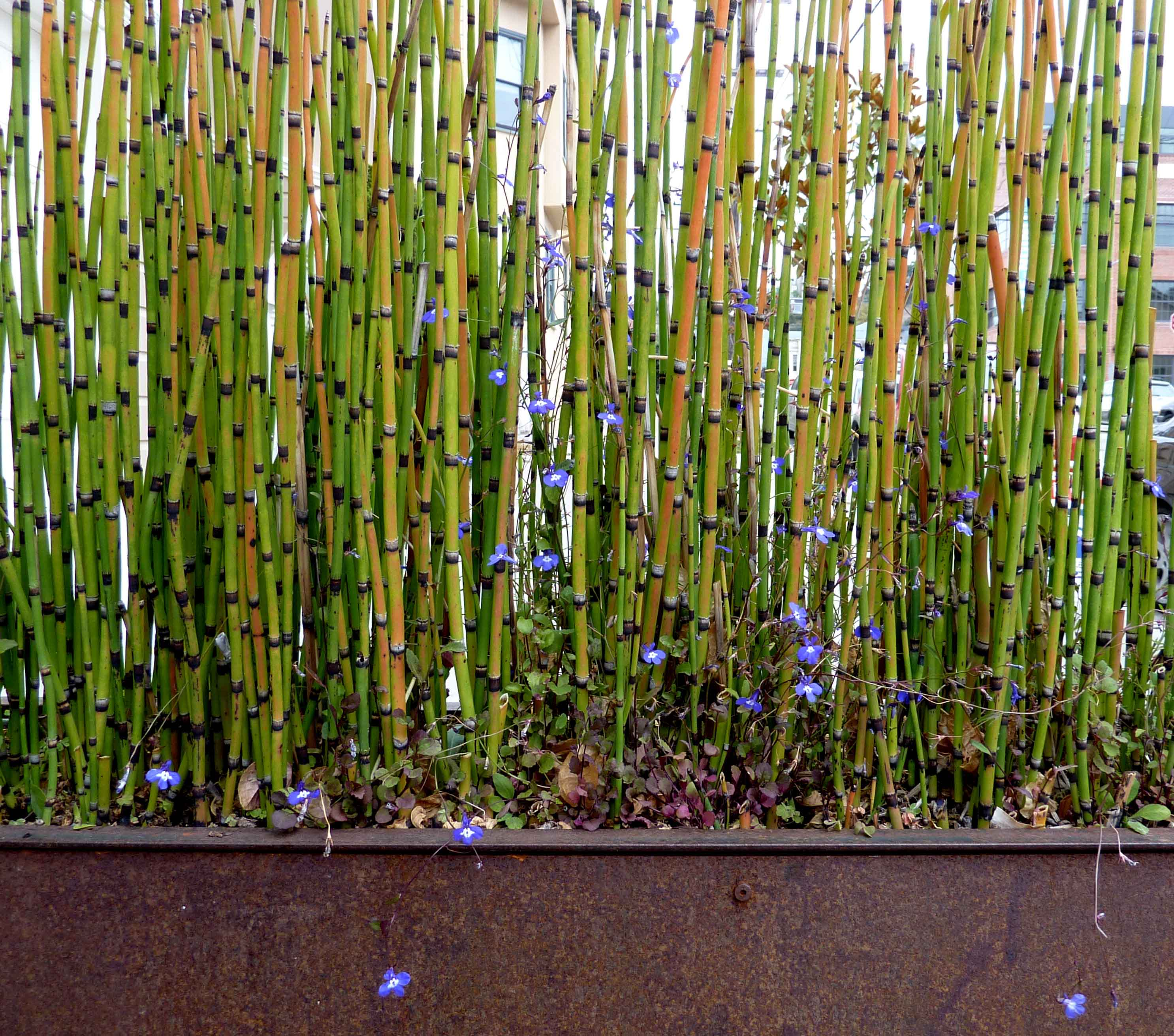 Piante da appartamento bambu stratfordseattle - Canne bambu in vaso ...