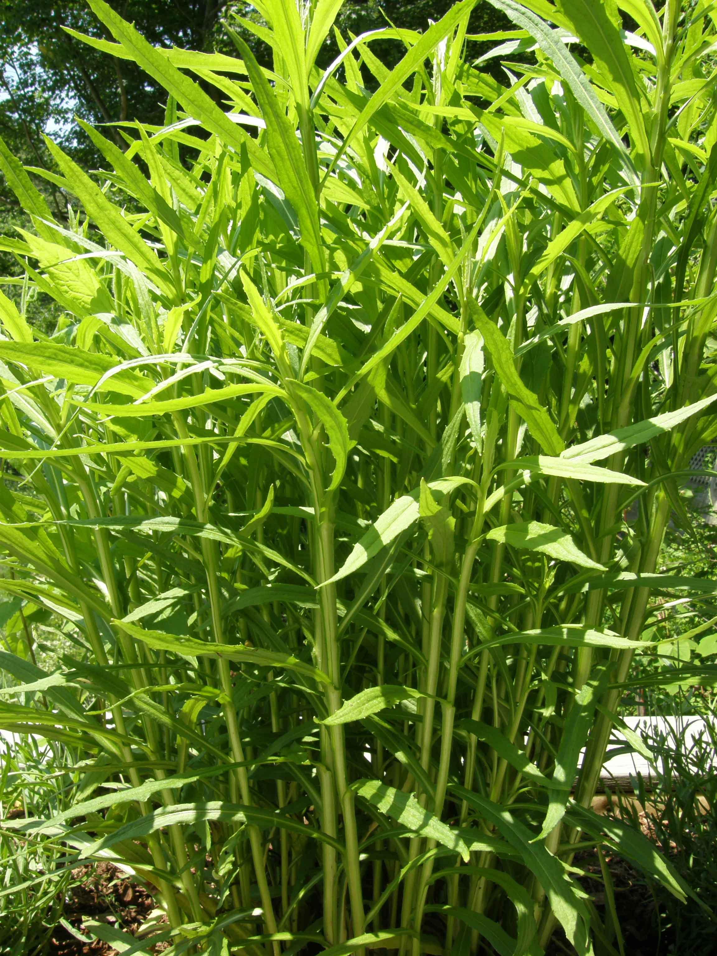 Piante bambu vendita idea creativa della casa e dell for Vendita piante da giardino