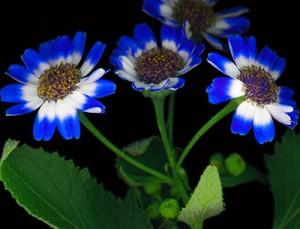 piante perenni giardino