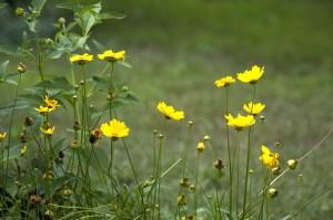 piante perenni
