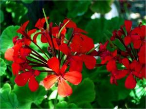 Moltiplicazione delle piante