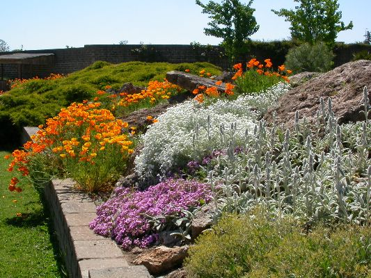 Giardino roccioso il potatore for Giardino roccioso con piante grasse