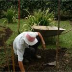 l'impianto deve essere preceduto dalla sistemazione del terreno