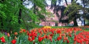 messer tulipano castello pralormo