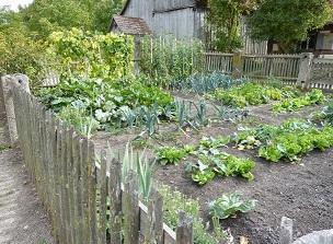 orto in casa, urban farming
