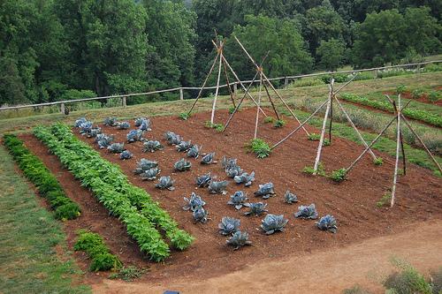 L 39 orto durante le vacanze accorgimenti da adottare prima - L orto in giardino ...