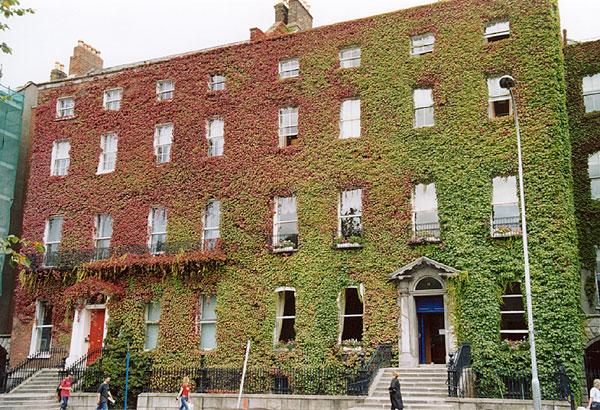 Pareti Esterne Casa : Pareti verticali vegetali inverdimento degli edifici