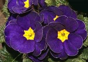 Cura delle piante in Primavera