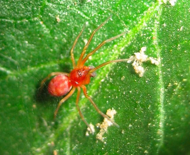 piante parassite elenco