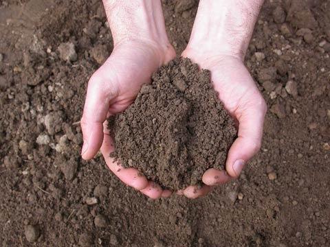 Coltivare biologico il terreno giardinaggio piante e fiori for Terra per giardino