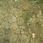 un terreno argilloso ed arido tende a creare delle crepe