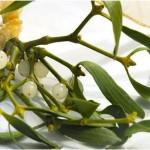 vischio pianta