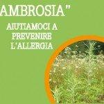 Ambrosia Allergia