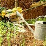 chi cura orto