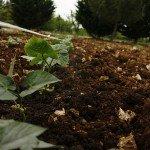 Cura di orto e frutteto