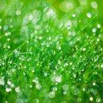 acqua in giardino