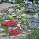 giardino roccioso piante