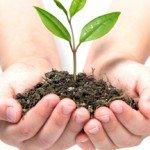 salute delle piante
