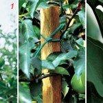 Tutori per piante