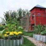 coltivazione orto