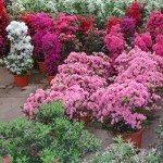 Quale pianta scegliere?